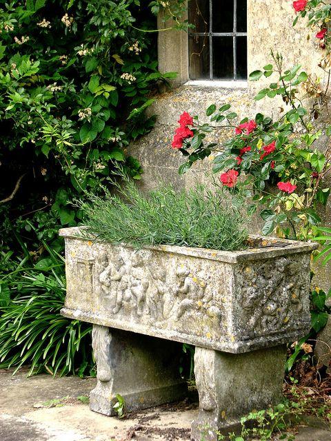 English lavender in an English garden