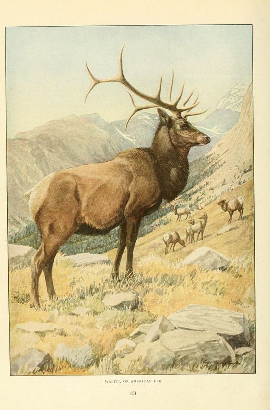Wild animals of North America  Washington, D.C.,The National geographical society[c1918]  Biodivlibrary. BHL. Biodiversity Heritage Library  blog.biodiversity...