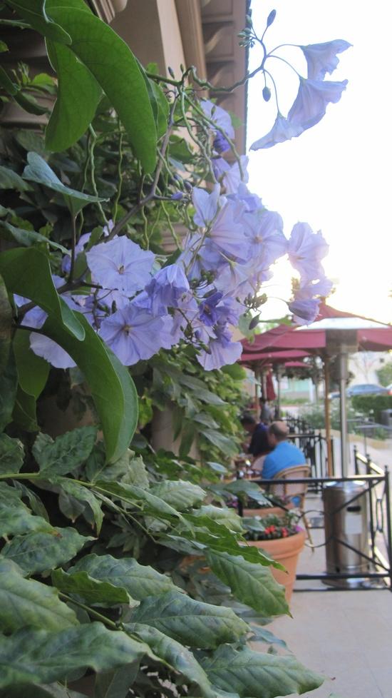 Garden Design. Nancy Goslee Powers