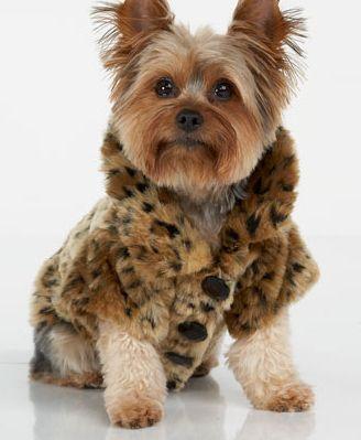 Philip Lim Leopard print dog coat $75