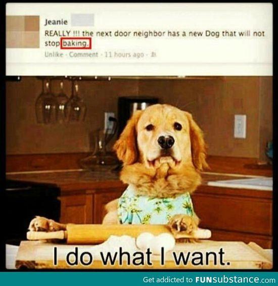 I do what I want dog