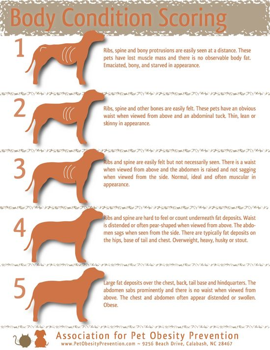 How to tell if your #dog is a healthy weight #pet-health-tip