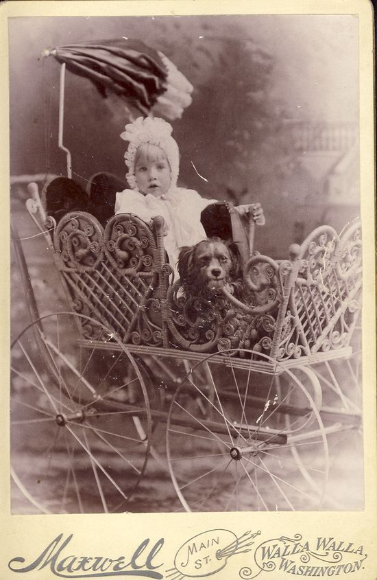 Little Girl and her dog in an Ornate Victorian Carriage in this Incredible Cabinet Photo Walla Walla Washington Circa 1880s.