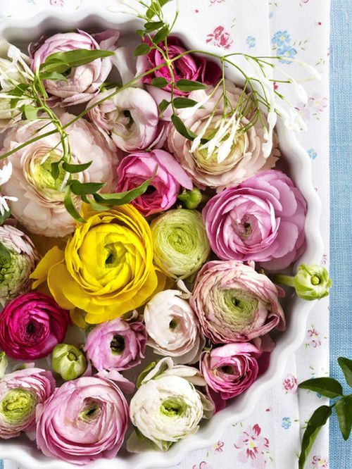 beautiful shades of ranunculus together