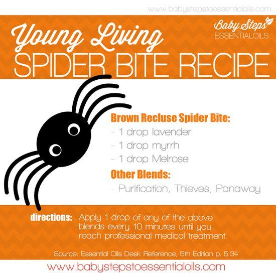 Essential oil spider bite treatment