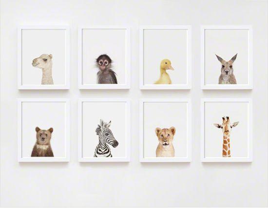 baby animal prints