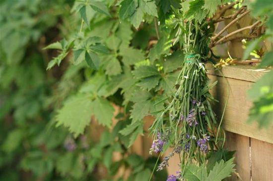 Drying Lavender = Garden Decor