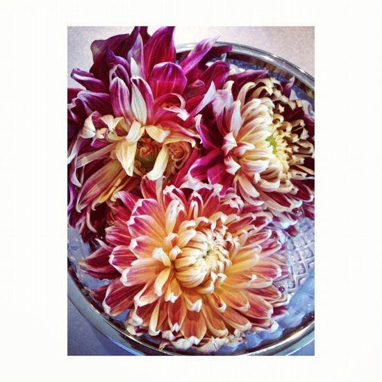 flower power Photo by @happymundane • Instagram