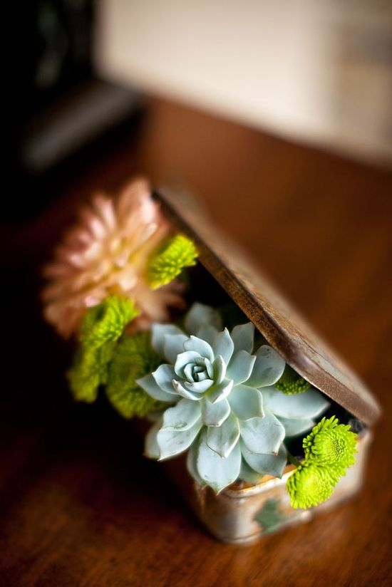 succulents. Cute display. I wonder if I could rework an old Altoids tin to do this?