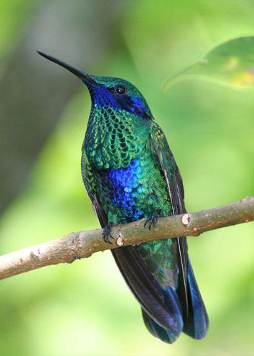 Hummingbirds. = )