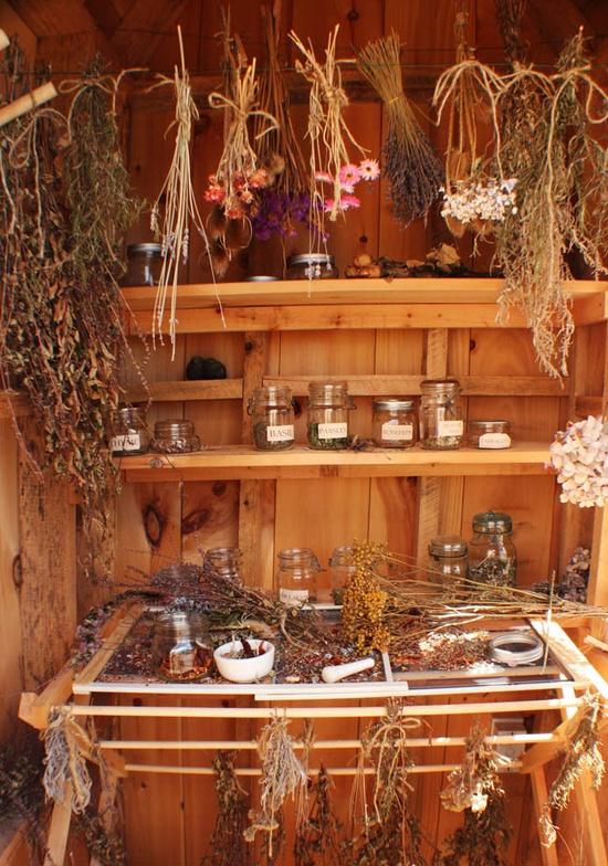 drying herbs...