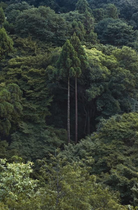 Woods ~ Kyoto Japan