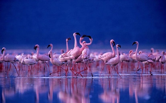 Eu Quero flamingos cor de rosa não Meu Casamento!  (# NoHomo, lmfao)