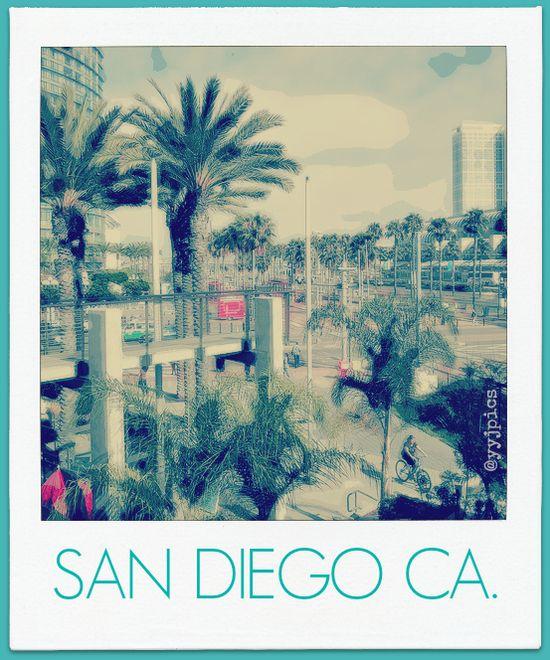 San Diego California palms