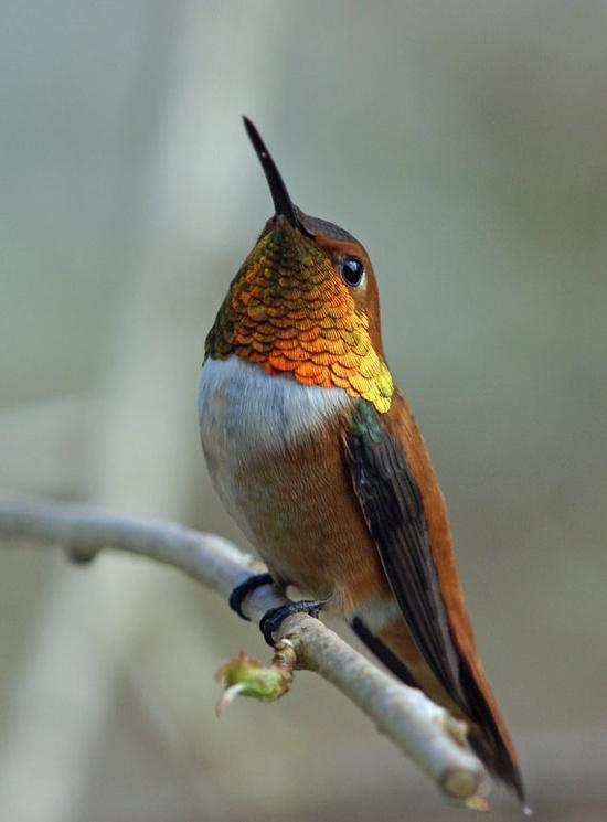 Hummingbird love!