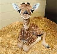 Exotic Animals - Bing Images
