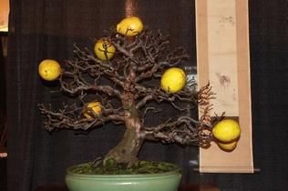 Exhibition brings lovers of bonsai art to Kannapolis