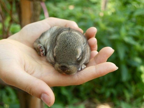 Unusual, cute baby animals