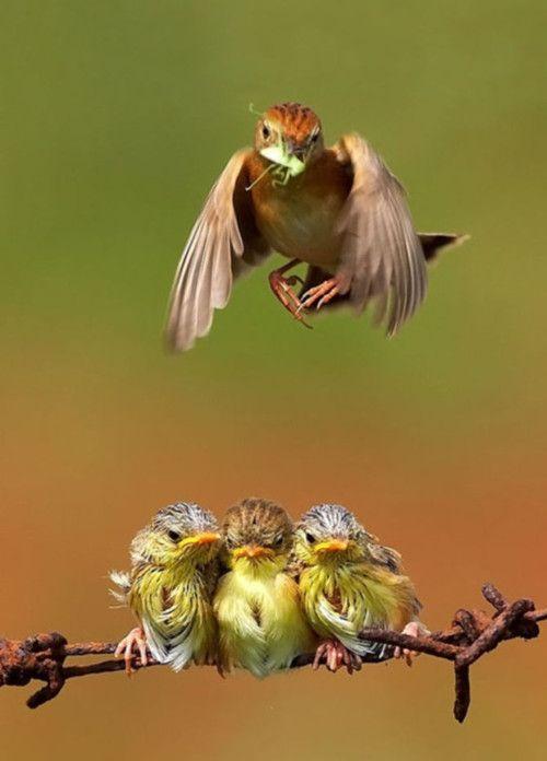 mama bird w/baby birds