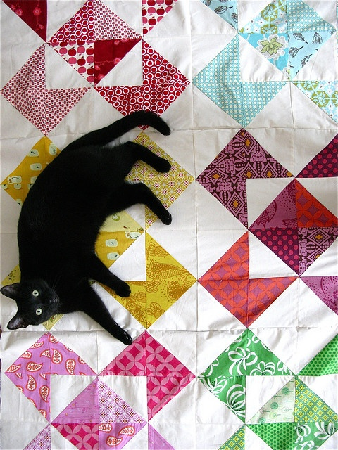 Love this quilt, and the cat!
