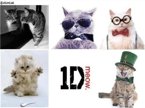 1D. Cat version. It's funny 'cause it's accurate!!! :)))))