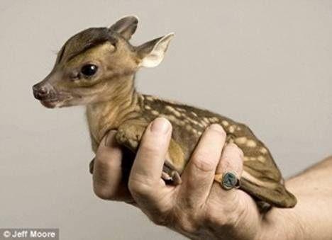 baby deer......omg!