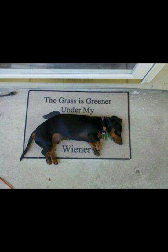 The grass is greener under my weiner...dog