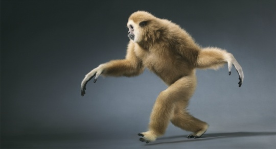 More Than Human is a spectacular series by photographer Tim Flach