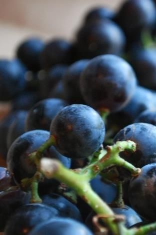 Blueberries are a great brain food!