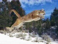 Wild Animals Photos
