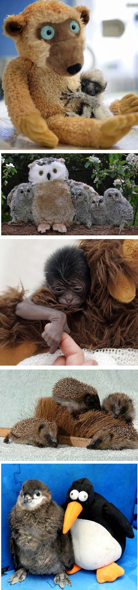 Baby animals with their surrogate Mamas!