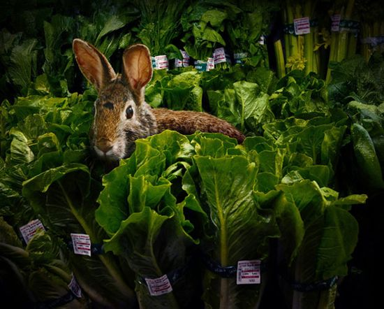 photographs of wild animals roaming the aisles of grocery stores