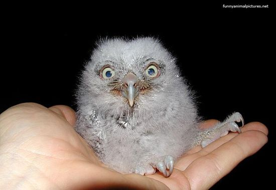 ... funny baby owl photo - Animal Pictures, Animal Wallpapers, Animal