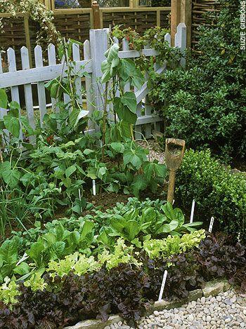 a little kitchen garden