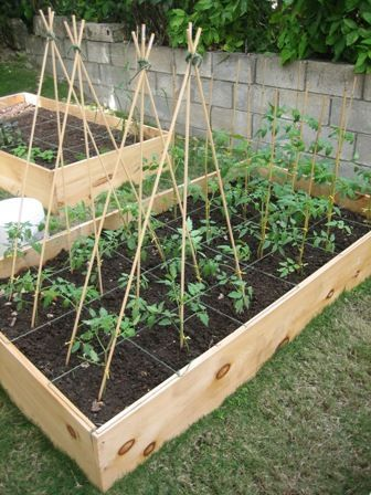 Square foot garden with bean pole trellises