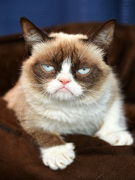 "Memes featuring forever-frowning feline Grumpy Cat (real name: Tardar Sauce) increasingly brought joy to the Internet this year. And she's just getting started: The sullen kitty (who is actually ""really sweet,"" according to her owner) is set to star in her own feature film. www.people.com/..."