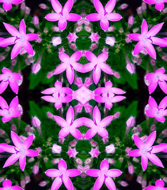 Love Hawaii Flowers