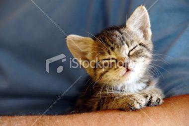 Sleeping baby cat Royalty Free Stock Photo