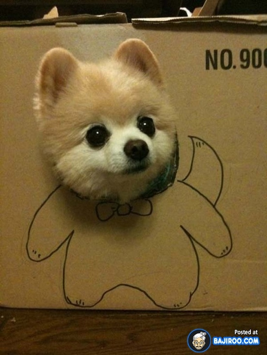 Dog Heaven: Most Funny Dogs in Boxes [48 Photos]