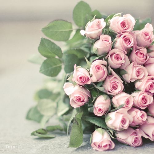nothing like pale pink roses