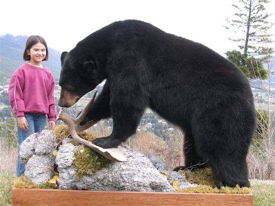 black bears, this has to be taxidermy because you can't get this close to a wild bear