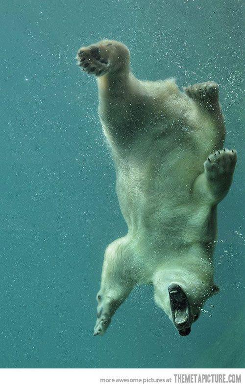 Underwater Polar #Bear
