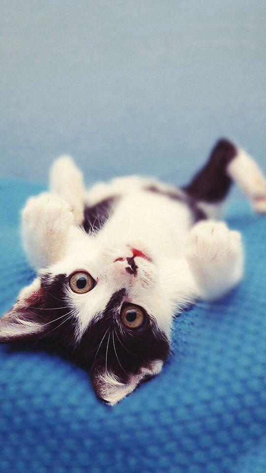 #Cute Cat