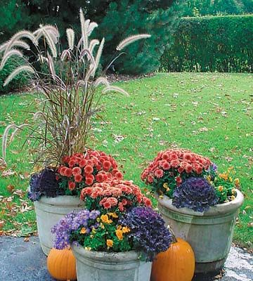 Adding Color to Your Fall Garden - Garden planting tips to keep vibrant color in your flowerbeds and containers after a hard frost.
