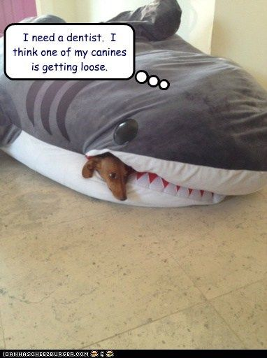 i need a dentist, one of my canines - Google Search