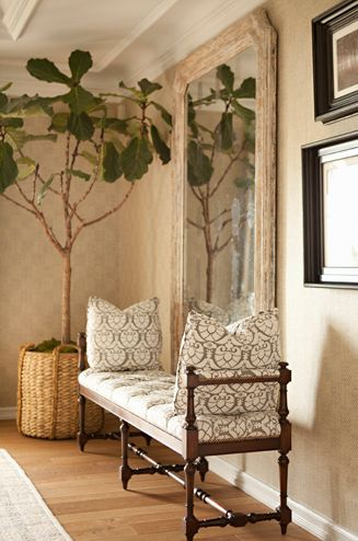 Bonesteel Trout Hall - Fiddle leaf fig plant in  basket, beautiful bench seat with amazing fabric