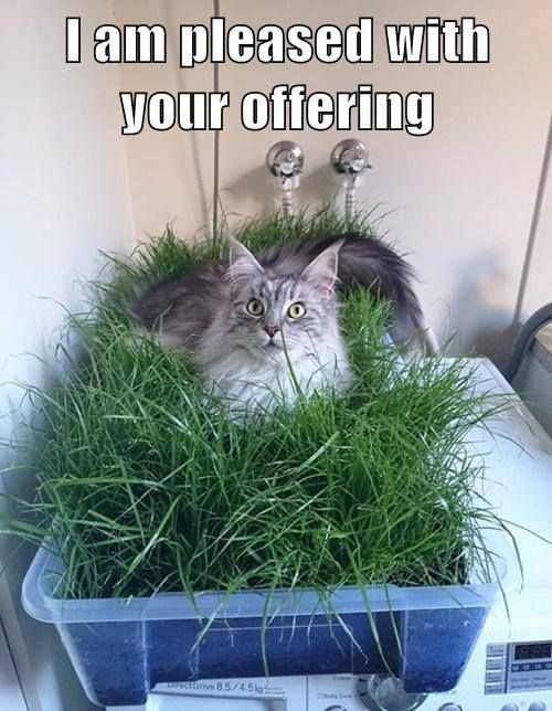 #funny #cats #funny #cat #lol #humor #hilarious #cute #kitty #cat #feline