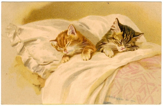 Postcard Cats Asleep