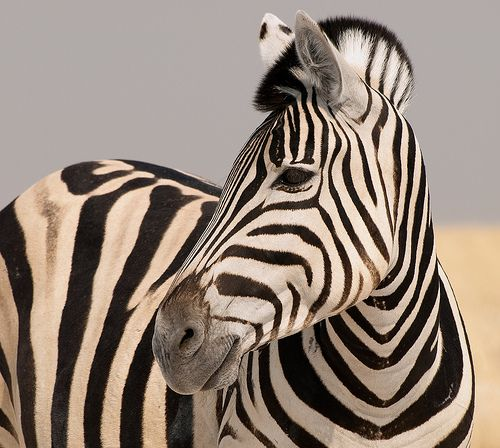 pretty #wild #animals