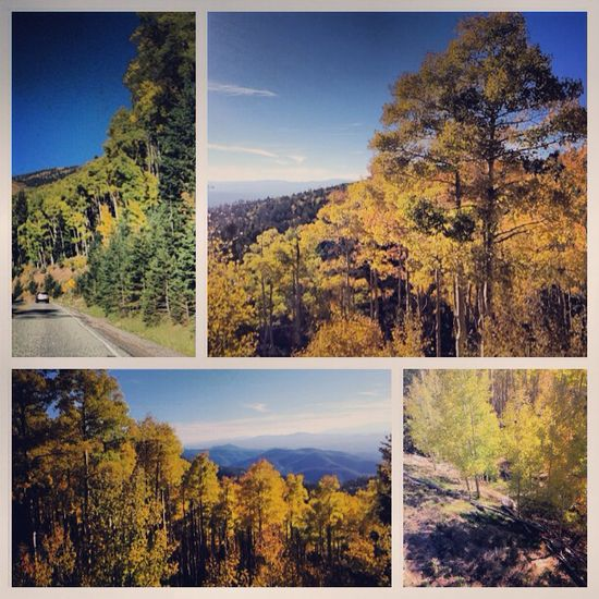 Scenic view from Ski Santa Fe on the Aspen Trail outside of Santa Fe (artists rd).